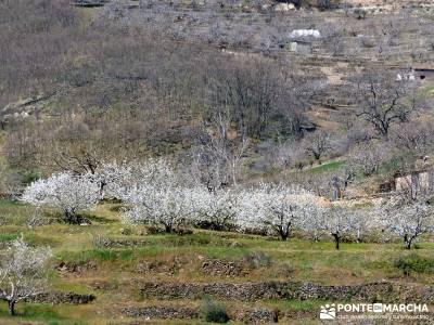 Cerezos en flor en el Valle del Jerte - manto blanco en el Jerte;san sebastian de los reyes rutas ra